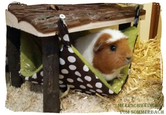 Glückliche Schweinchen in unseren Hängematten. Vielen Dank an T. Gehrke für das süße Foto