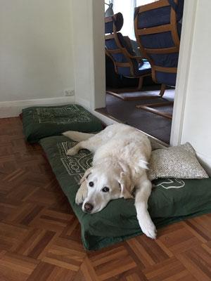Und Lulu entspannt