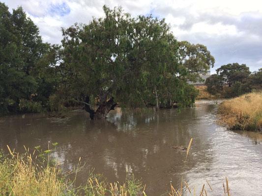 ...ist ein kleines Bächlein in Craigieburn innerhalb von Stunden plötzlich zu diesem Fluss angeschwollen