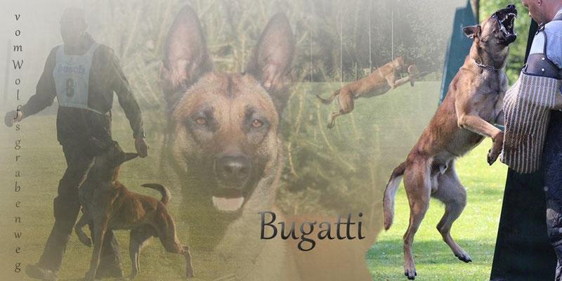 http://www.working-dog.eu/dogs-details/1010153/Bugatti-vom-Wolfsgrabenweg