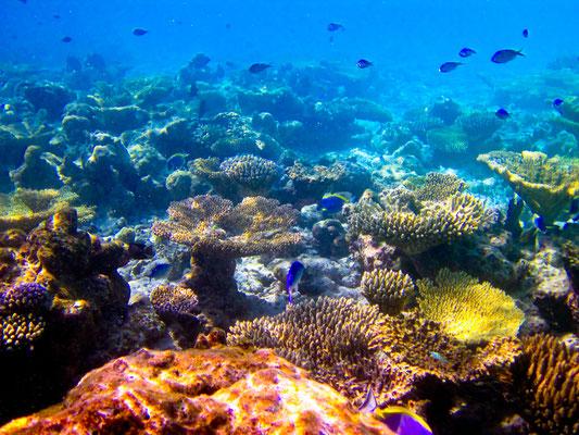 Die fantastische Unterwasserwelt im Mergui Archipel