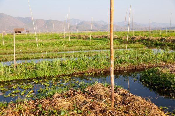 In den schwimmenden Gärten pflanzen die Bewohner des Sees Gemüse und Früchte an.