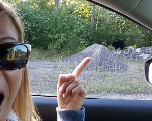 Babs Kijewski Schwarzbären in Kanada