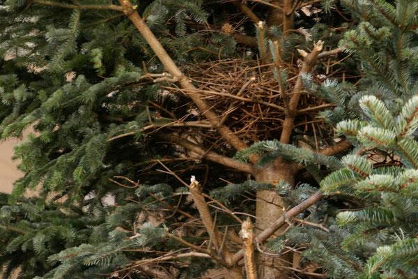 Und da ist auch noch ein verlassenes Vogelnest zu sehen