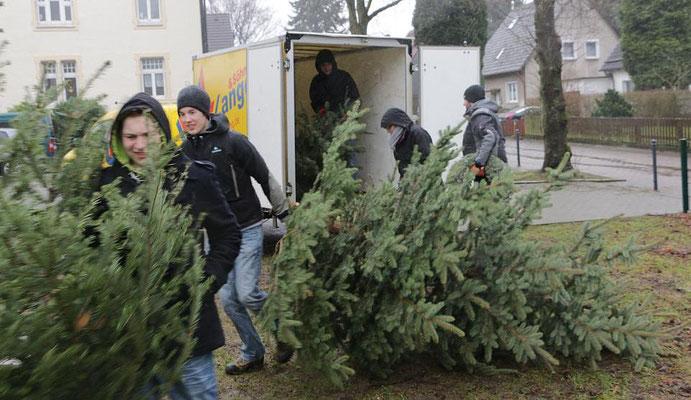 Beim Heranschaffen ausgedienter Weihnachtsbäume (Foto: Archiv)