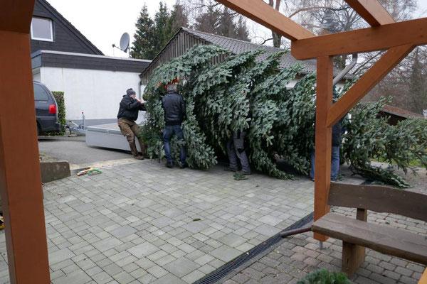 Baum wird auf den Hänger gezogen