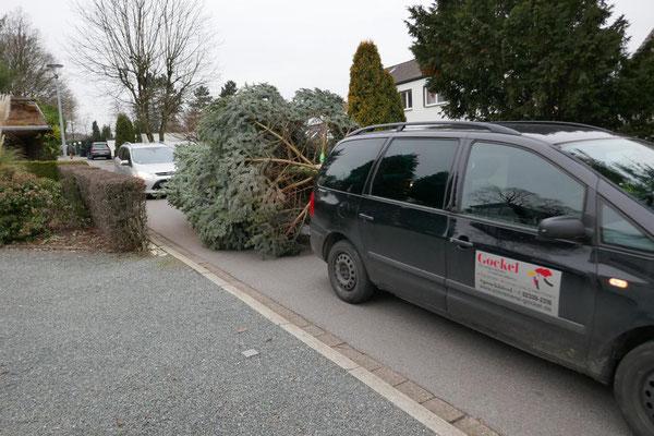 Abtransport des Baumes zur Kirche