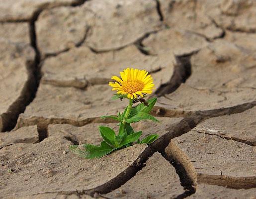Frische Pflanze wächst aus sprödem Boden