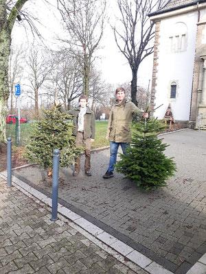 Die Bäume werden zusammengetragen...