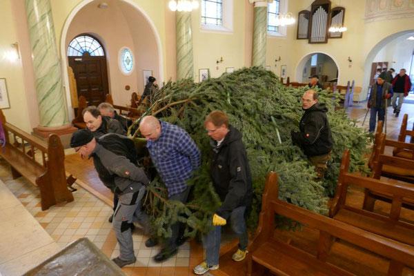 Am 15. Dez. 2018 ist der Baum in die Kirche geschafft...