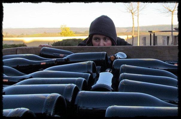 Die Weinmakerin betrachtet die abgefüllten Flaschen bei Seven Springs