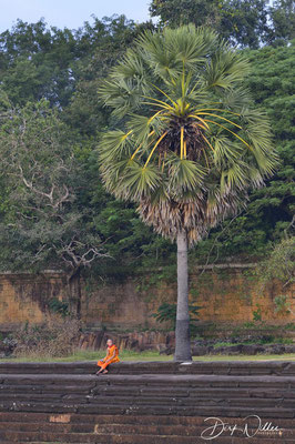 A monk in the area of Angkor Wat