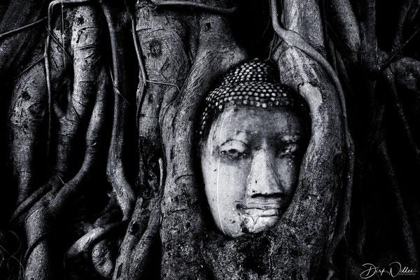 the famous Banyan Tree in the Wat Mahathat area @ Ayuthaya Historical Park [Ayuthaya/Thailand]