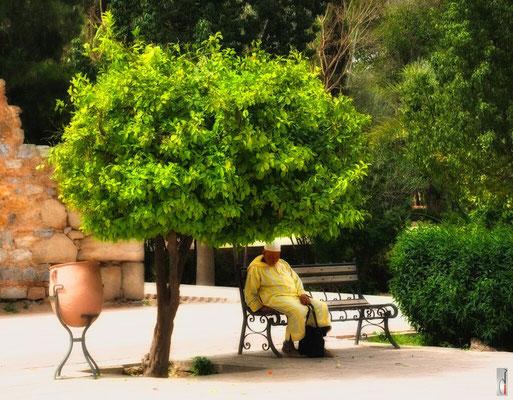 Marrakesh - Koutoubia gardens