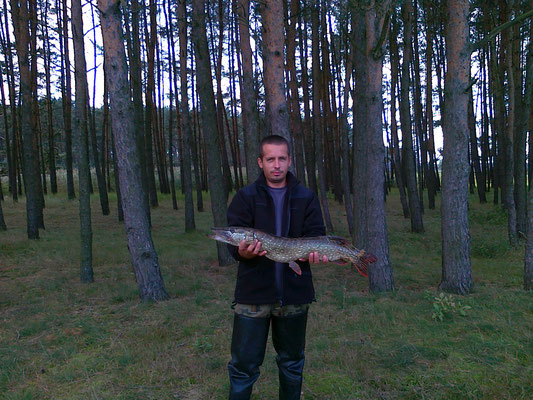 Szczupak 80 cm, Niesłabin