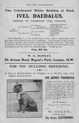 Deckrüden Anzeigen eines Toy Bulldog mit Angabe der Ahnentafel aus London