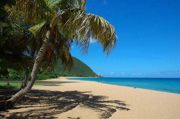Guadeloupe, plage de Grande Anse