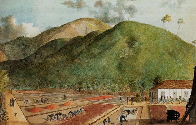 Plantation de café sur l'île Bourbon, Patrie de Rosemend, vers 1800