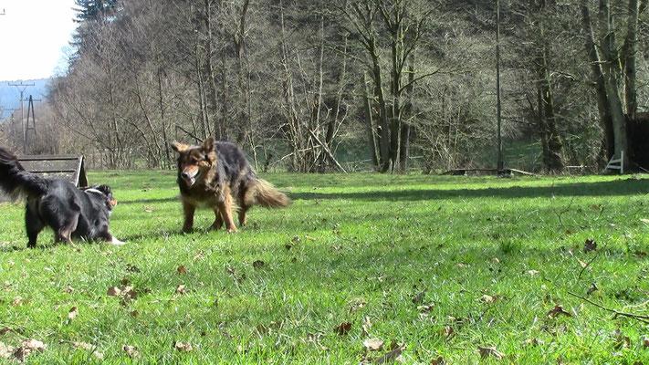 Training in Roßbach/Wied
