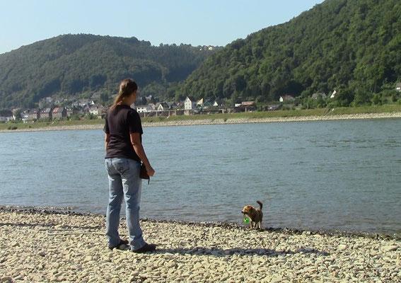 Am Rhein zwischen Bad Hönningen und Rheinbrohl