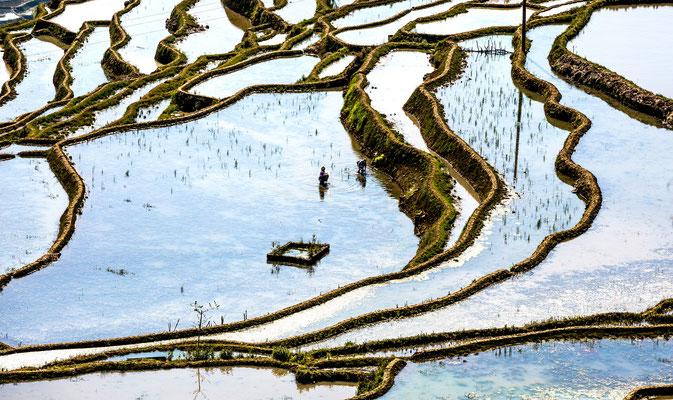 Rijstterassen, Honghe