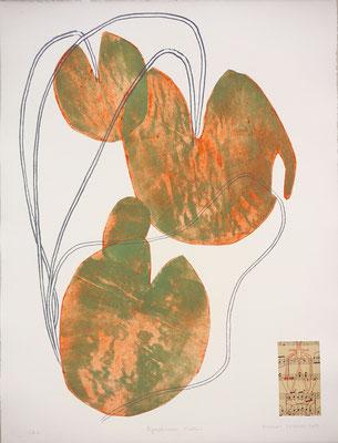 """Vincent DEZEUZE, """"Nympheaceae N alba L"""", Gravure technique cellulogravure, 65x50 cm, 2019"""