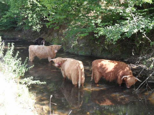 Extrem heisser Sommer 2015, Abkühlung im Salmbach ´In der Au´