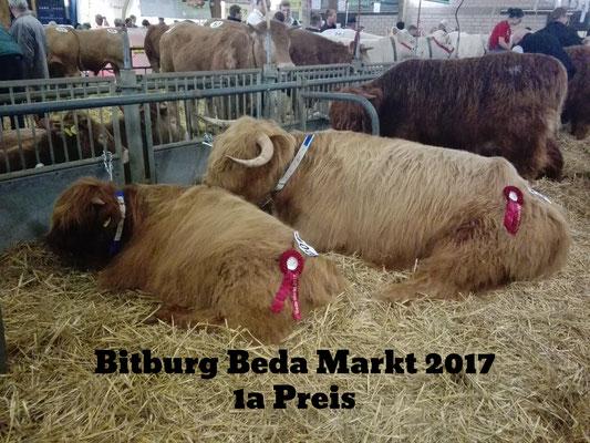 Toller Erfolg: 1a Preis und damit Tagessieger der Highland Cattle