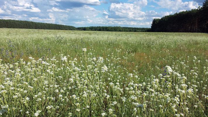 Ein Feld im Sommer