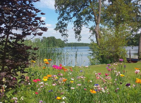Sommerblumen am See
