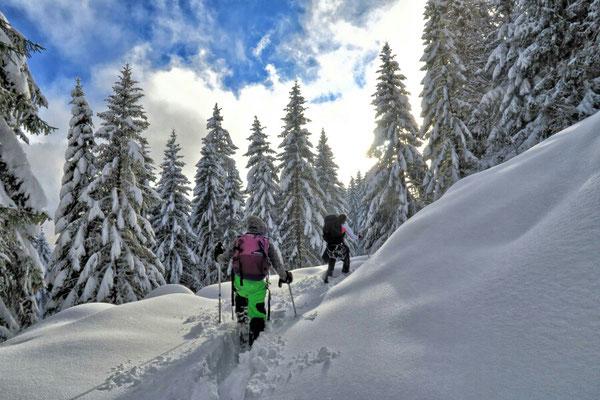 Winterwonderland            © Gisela Kuzel