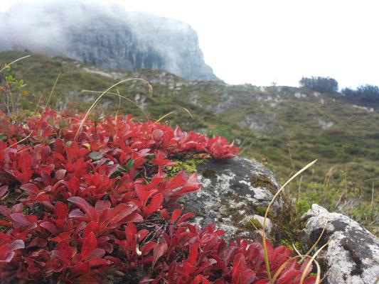 Alpenflora