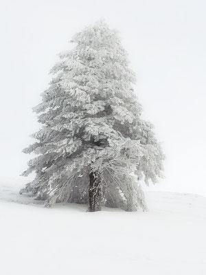 Mein Lieblingsbaum 😍❤️
