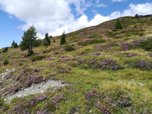 Alles blühlt lila 😍. Ich liebe die wunderschöne Blütenvielfalt in den Bergen