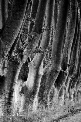 Sur la route de Sillan la cascade - Canon eos 6d-Canon 200 f2
