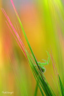 Jeunes couleurs de printemps