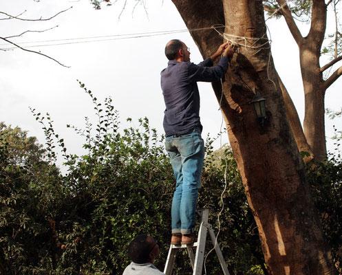 Accrochage du réseau de cordages qui soutiendra le boma