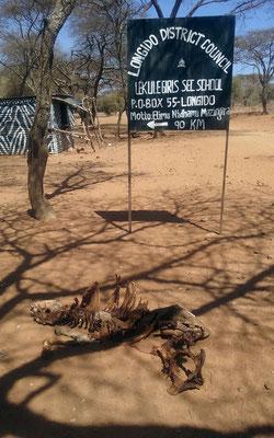 On quitte la route de Nairobi à Longido pour 55km de piste à travers le bush.