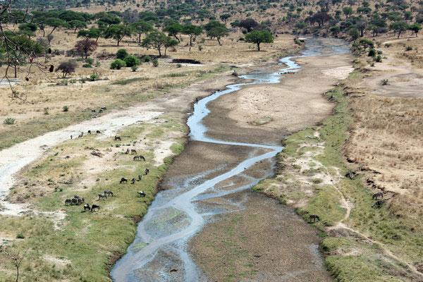 La rivière Tarangire