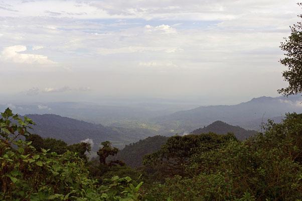 Unterwegs zum Bergdschungel