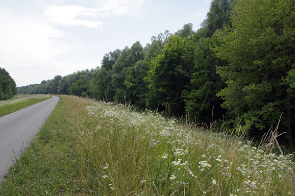 Dammradweg