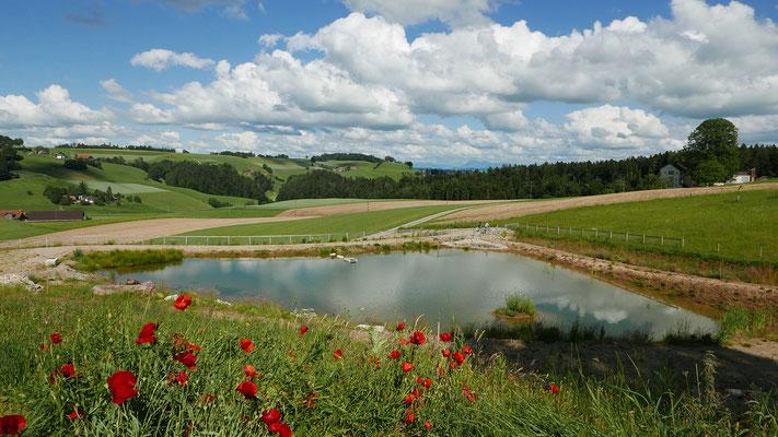 2 xJA, 1xNEIN: Wildbergweiher bei Fischbach wäre ohne Fruchtfolgeflächenkompensation nicht realisierbar.