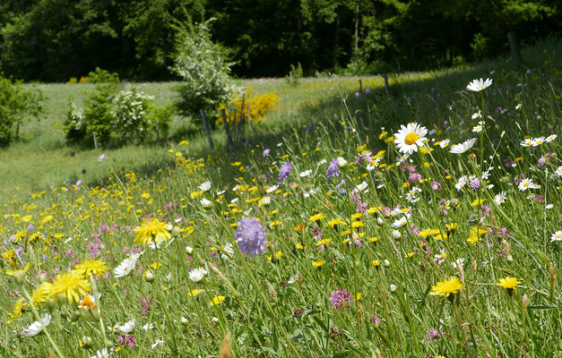 Magere artenreiche Wiesen und Weiden werden angelegt. © Manfred Steffen