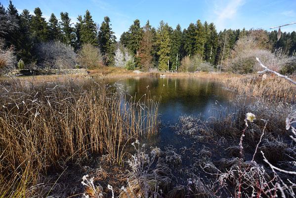 Der Grüenbodeweiher bei Pfaffnau zählt auch zu den Landschaftsperlen, die ohne Kompensation nicht mehr gebaut werden könnten.