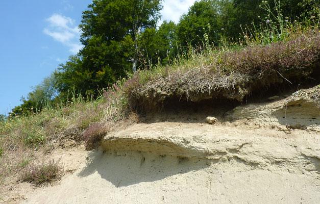 Offene Fluhbereiche in Wiesen und Weiden werden nicht mehr gedüngt und in Gehölzen wieder besser besonnt. © Manfred Steffen