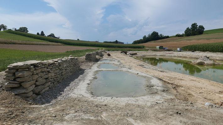 2 xJA, 1xNEIN: Um wieder artenreiche, magere Flächen für gefährdete Tiere und Pflanzen zu schaffen, muss auch im Kulturland nährstoffreicher Humus entfernt werden können.