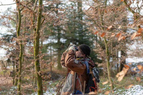Der Verein sucht regelmässig nach Baumhöhlen, die z.B. von Fledermäusen, Vögeln und Hornissen bewohnt sind ...