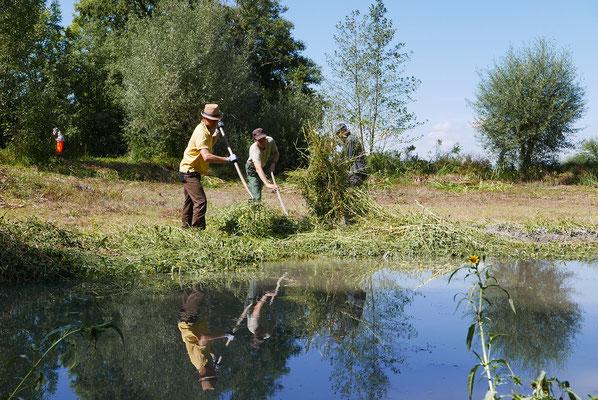 Am Äschweiher wird vor dem Einstau die Teichbodenflora gemäht.