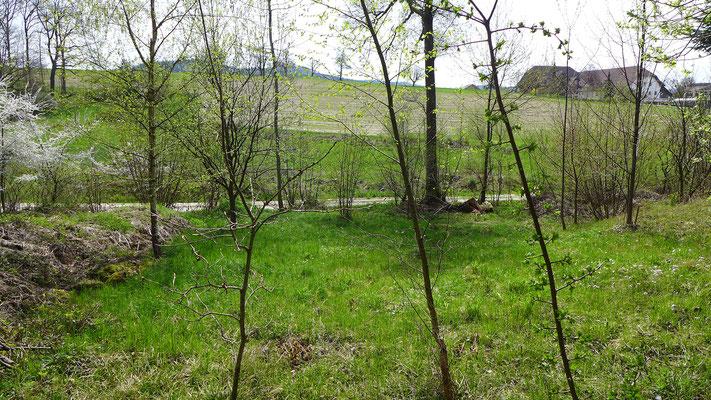 Auch Waldwiesen, die vom Verein gemäht werden, bereichern Teile des Chlosterwaldes