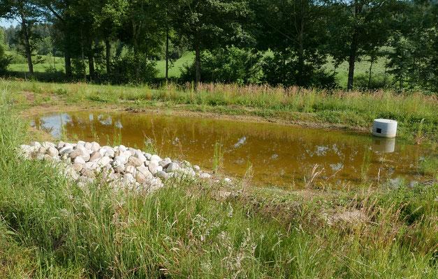 An einigen Orten werden für Kreuzkröten zeitweise einstaubare und mähbare Flutmulden angelegt. © Manfred Steffen